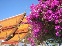 The glories of Doi Suthep, Chiang Mai